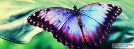 Motýlik už odlieta